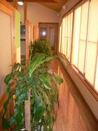 廊下には植物